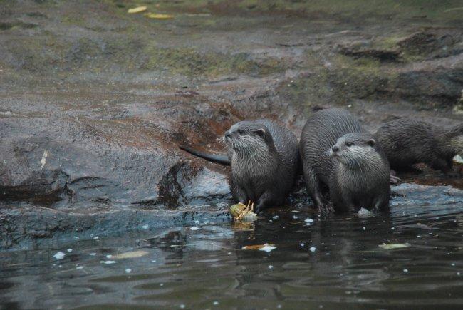 Otter-esting.