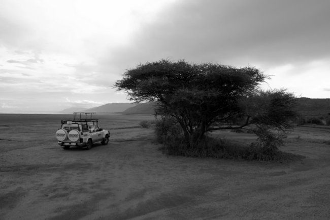Cloudy Safari